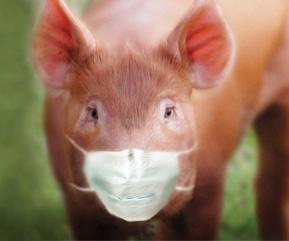 A Gripe Suína e o Triunfo dos Porcos