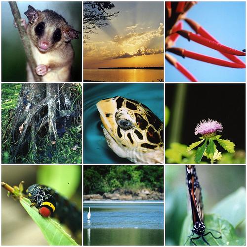 Dia Internacional da Diversidade Biológica