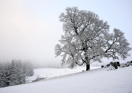 Chegou o Inverno